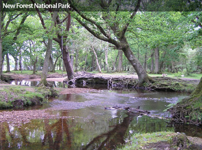 New Forest Photograph